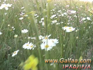 [عکس: gol-1385.jpg]